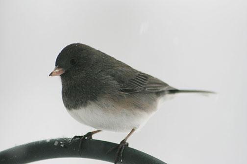 snow birds peripheral perceptions