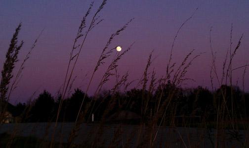 purple dusk rev