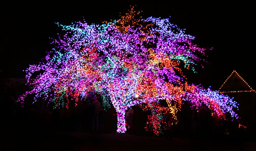 magic tree 2011-1