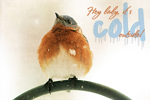 cold bluebird-minus 43-72