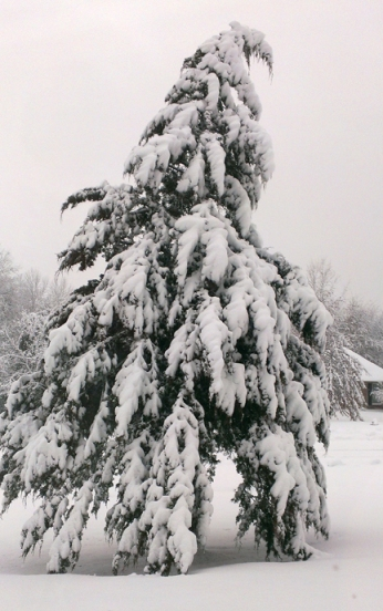 Feb cedar snow
