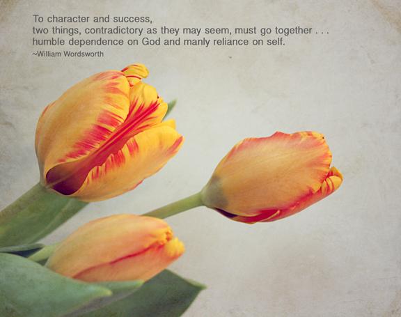 wordsworth tulips72