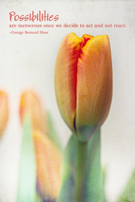 TT tulip72