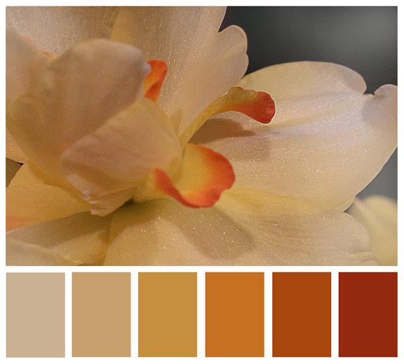 daffodil palette72