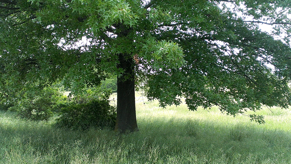 SFPkwy-tree horiz