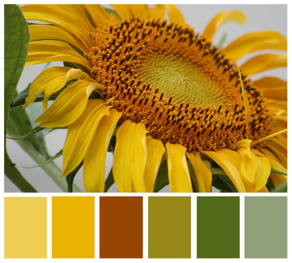 sunflower pallette72