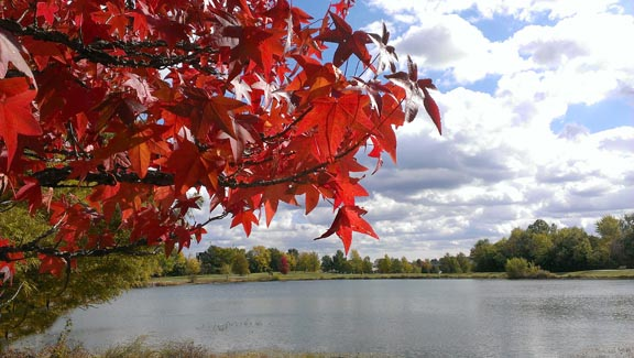 red tree by lake
