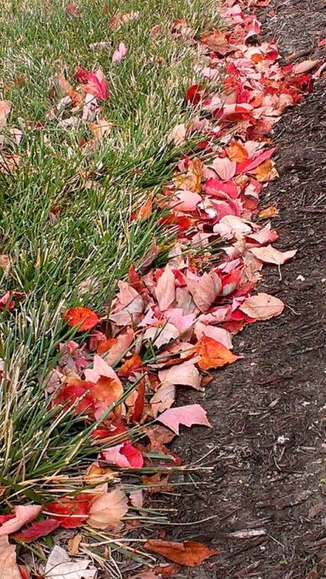 swept leaves