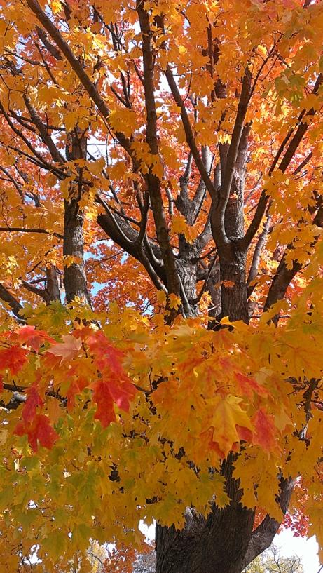 Fall 2013 3