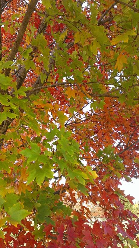 fall 2013 4