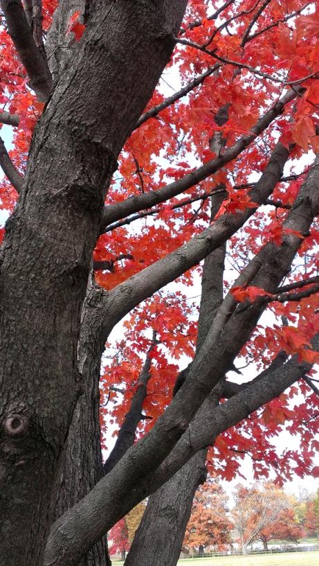 Fall 2013 7