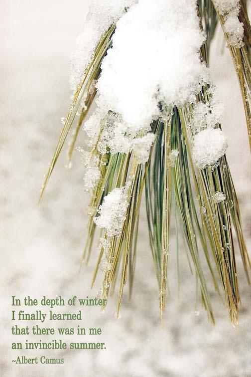 pine snow72