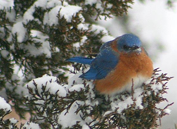 bluebird 2014