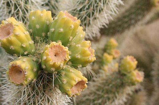 Botanical 8