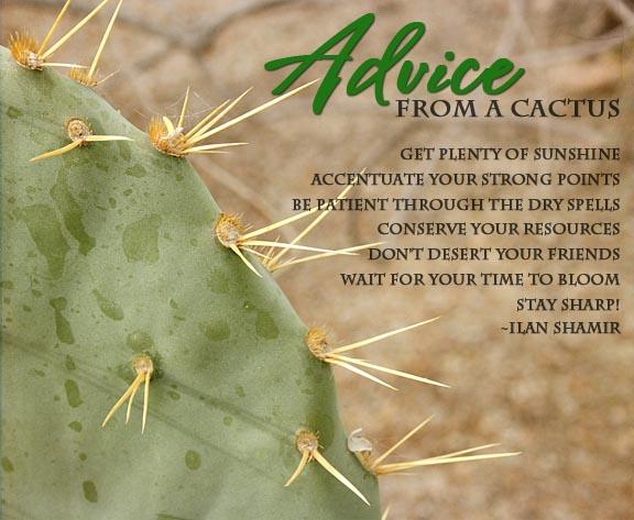 cactus advice