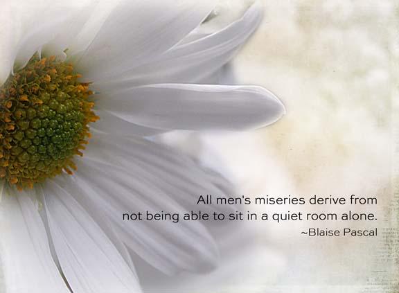 daisy quiet72