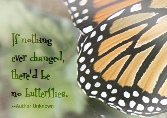 monarch wing