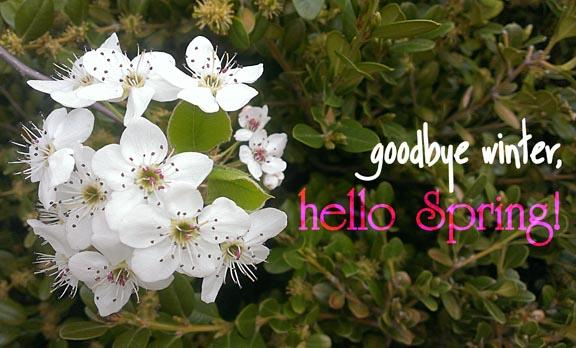 hello spring72