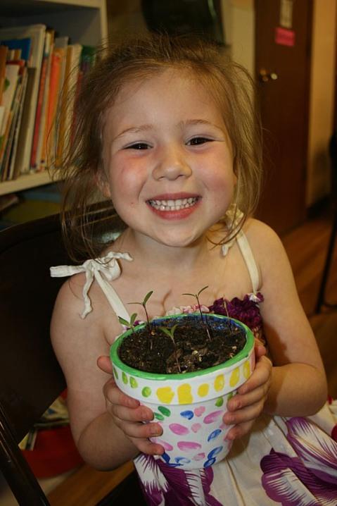 peanut potted plants