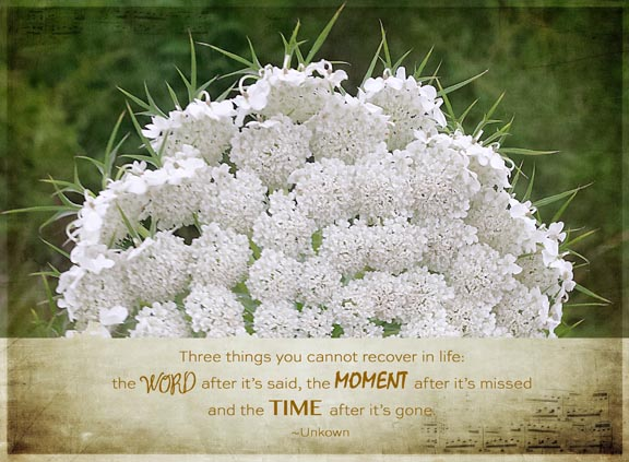 Queen Anne's lace72