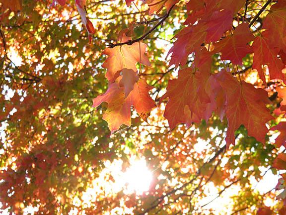 Autumn '14 1