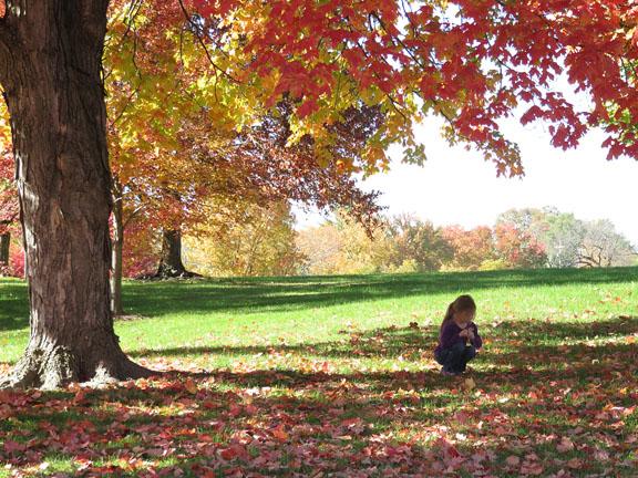 Autumn '14 2