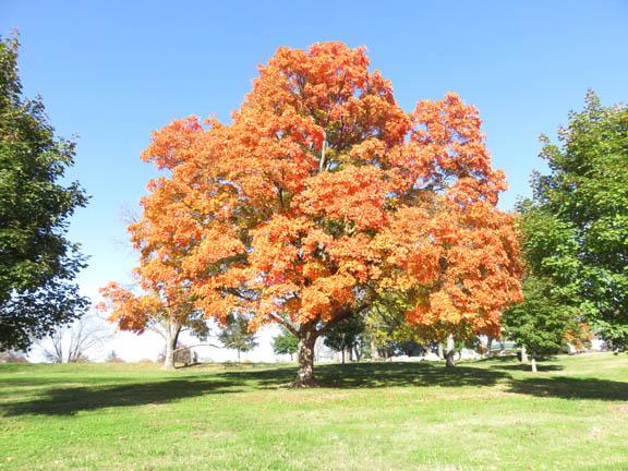 Autumn '14 3