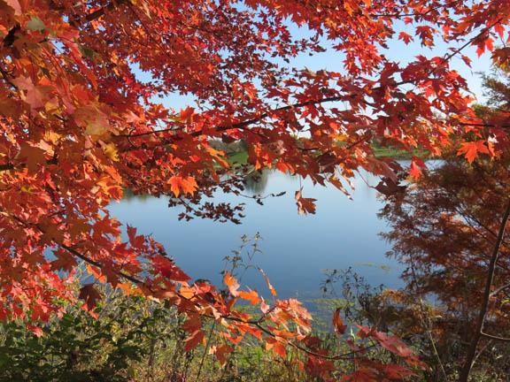 Autumn '14 5