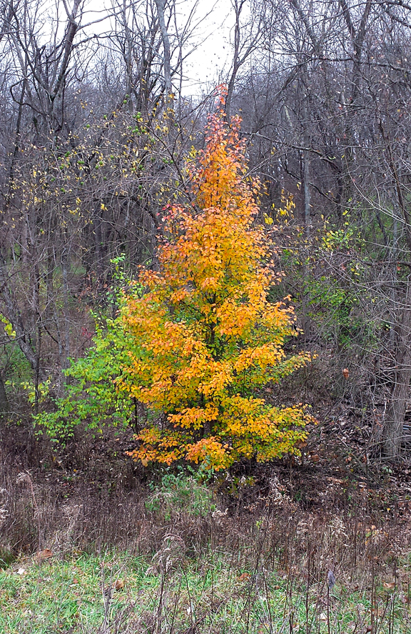 tree in woods