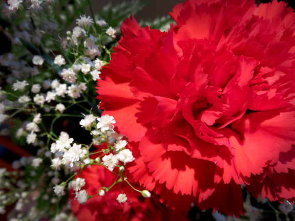 birthday carnations