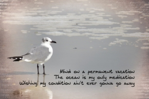 songography-seagull 72