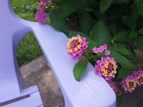lantana and chair