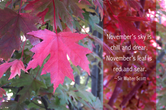 november-leaf-quotography